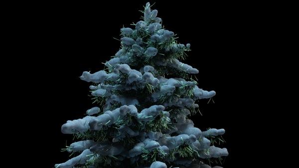 TreeSNOWneedles1